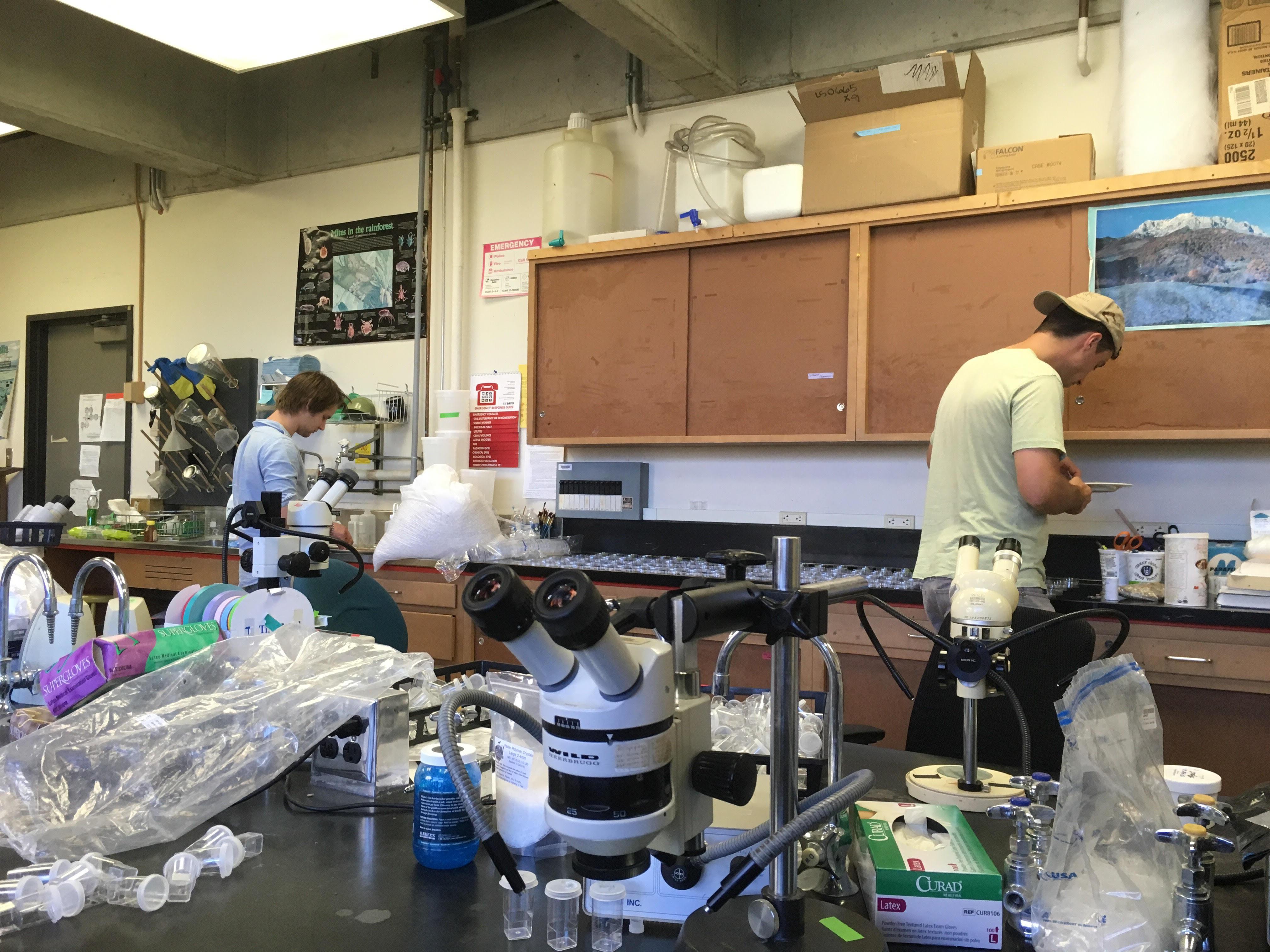 labwork